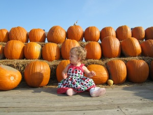 This Boston Baby is patiently waiting to pick out the perfect pumpkin.